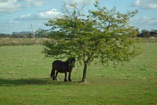 Sheltering Pony